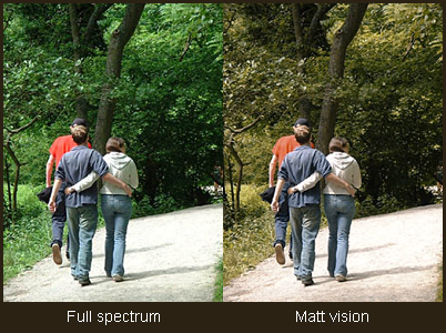 How a colour blind person sees the world | Matt Wilcox  net